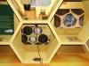 Развитие пчелы в сотах