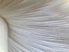 Бледная поганка, Amanita phalloides