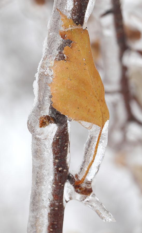 Ледяной дождь