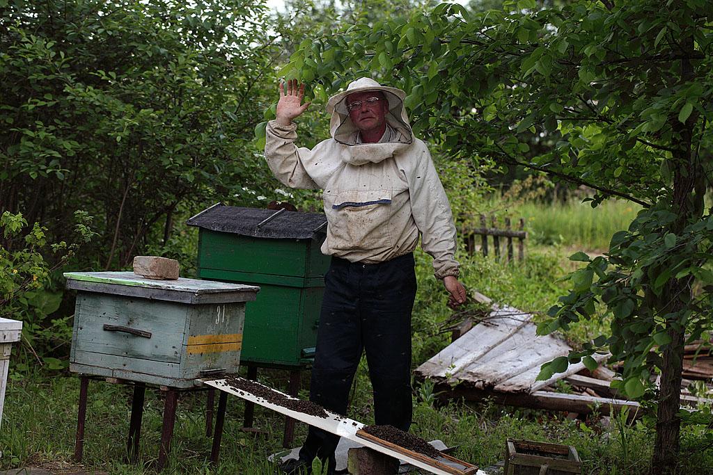 Осталось подождать полного захода всех пчёл