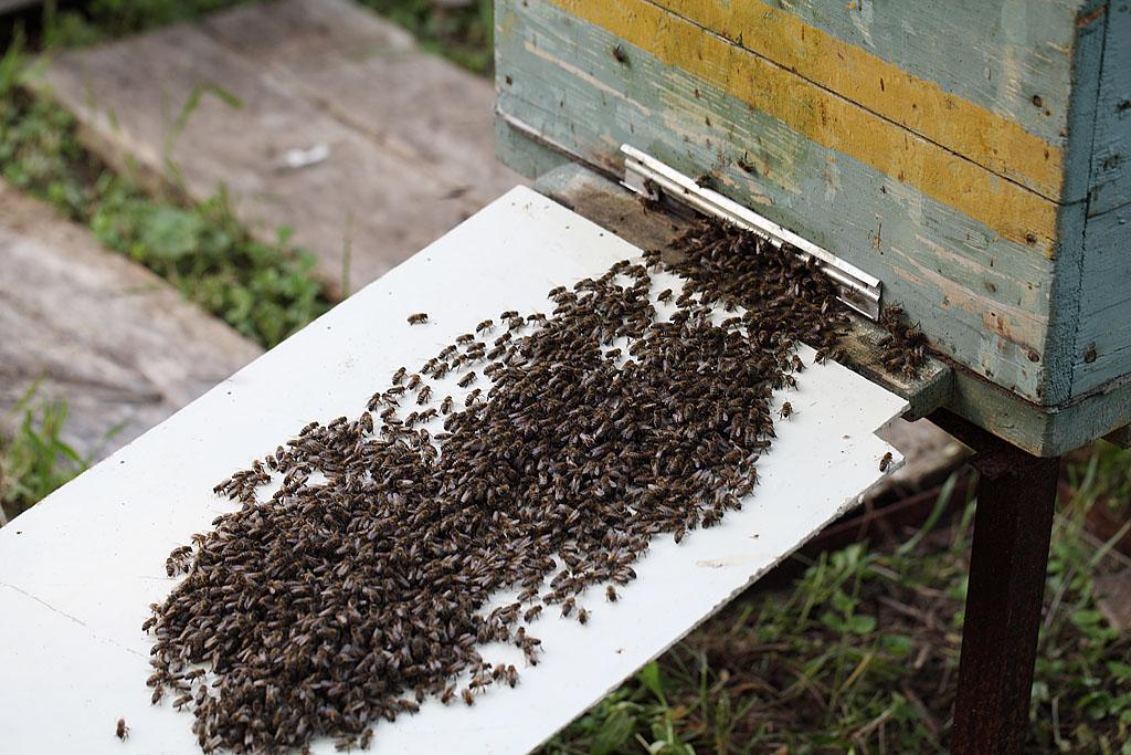 Течёт пчелиная река