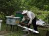 Жду когда пойдут пчёлы в улей