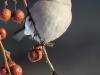 Обыкновенный снегирь Pyrrhula pyrrhula