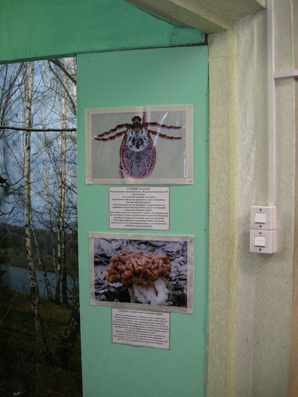 Экспозиция в биологическом отеделе
