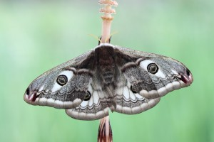 Ночные бабочки на ночь Выборгская объявления эротический массаже в спб
