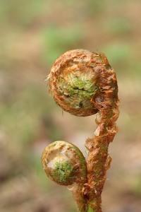 5. Чревоугодие или плотоугодие, не знающее никаких постов, соединённое со страстною привязанностью к различным увеселениям.